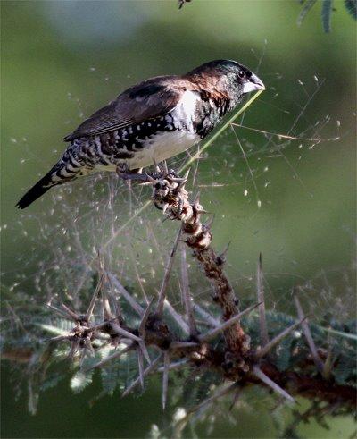 Paul Oliver birding in Southern Tanzania's Katavi National Park