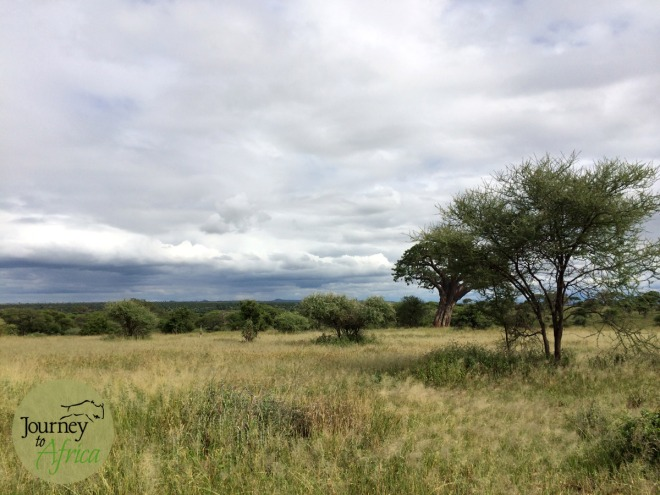 tarangire_landscape_iphone