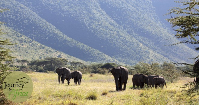 elephants_in_ngorongoro