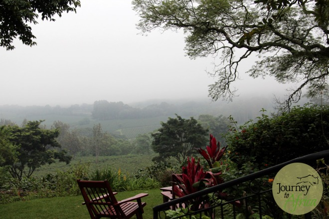 The morning mist from the main lounge area. The coffee plantation is hidden in the mist.