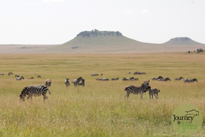 Northern_Serengeti_2