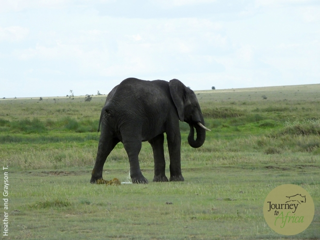 Elephant_Lion1