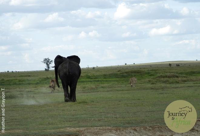 Elephant_Lion2